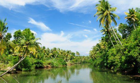 Riflesso di palme da cocco sulle backwaters in Kerala India